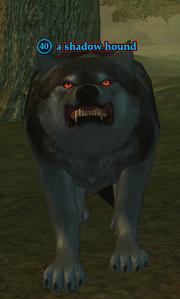 A shadow hound