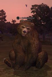 A training bear
