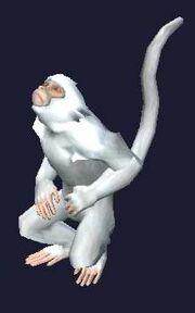 A pet monkey (visible)