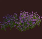 Purple-flowered-shrub