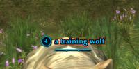 A training wolf