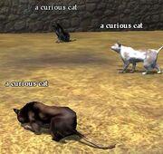 A curious cat