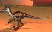 A desert raptor