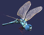 Race dragonfly