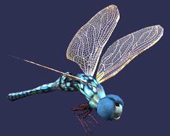 File:Race dragonfly.jpg