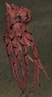 Race octopus