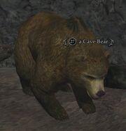 A Cave Bear