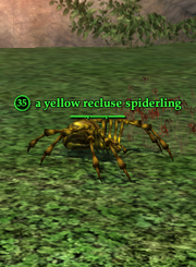 A yellow recluse spiderling