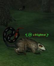 A blightrat