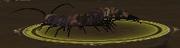 Plague-ridden Crawler Queen