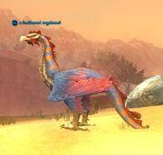 A feathered vagabond