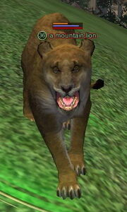 A mountain lion