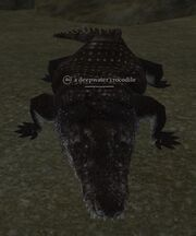 A deepwater crocodile
