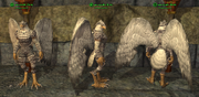 Aviak (Templar) Placed