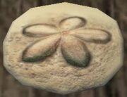 Sand urchin shell (Visible)