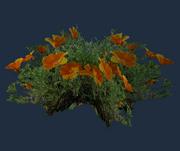 Pristine Desert Poppies (Visible)