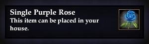File:Single Purple Rose.jpg