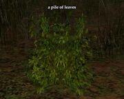 Pile of leaves (Zek)