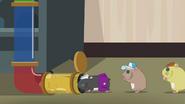 Hamsters returning to habitat EG2