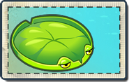 Lily Pad Big Wave Beach Seed Packet