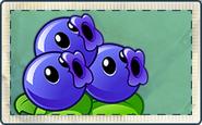 Blueberries Seed Packet