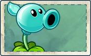 Droplet Pea Seed Packet