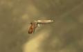 Pistola automática 9mm TLAD 02.png