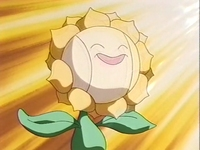 Archivo:EP137 Sunflora (5).png