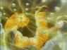 EP005 Pikachu usando rayo.png