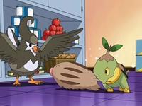 Archivo:EP561 Staravia y Turtwig impidiendo que Swinub devore la comida.png