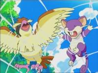 Archivo:EP470 Pidgey y Rattata atrapados en la tela de araña.png