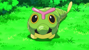 EP792 Caterpie.png
