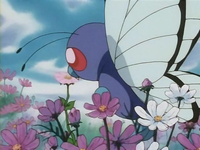 Archivo:EP182 Butterfree.png