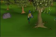 Escaperuins magic tree