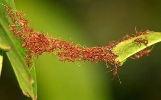 Animal teamwork.jpg