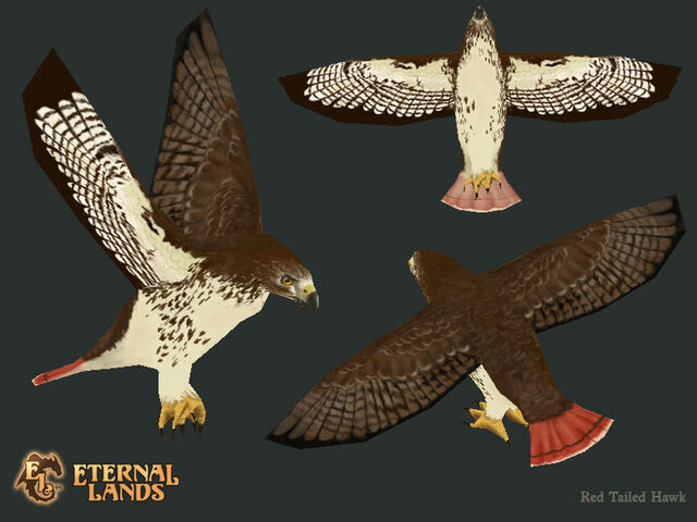 File:Creature Hawk.jpg