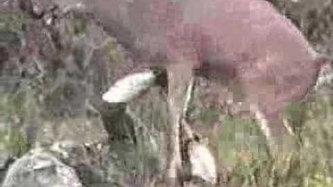 Thumbnail for version as of 20:54, May 14, 2012