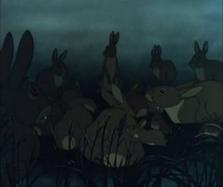 Herd of rabbits
