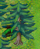 File:Normal Tree 2.png