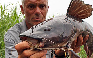 File:Kamba-catfish-324x205.jpg