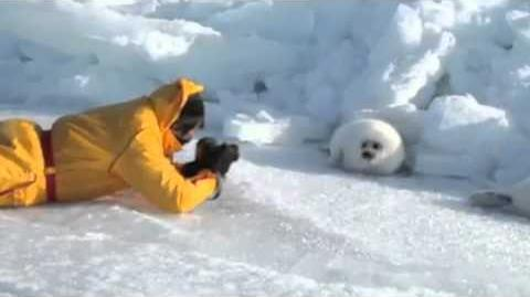Lazy Harp Seal Has No Job - song by Parry Gripp