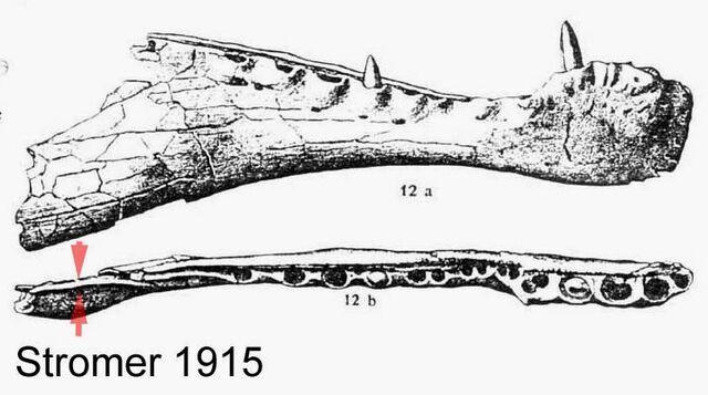 File:Spinosaurus - 7(Holotype jaw).jpg