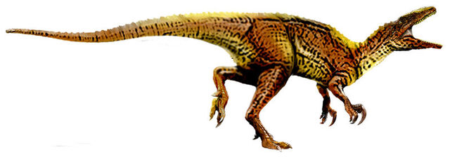 File:800px-Australovenator.jpg