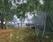 Driftwood 8