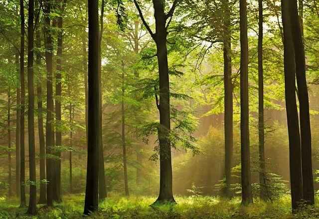 File:Autumn-forest.jpg