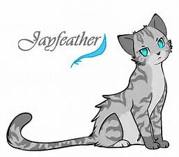 File:Jayfeather.jpg