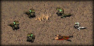 Geckos and dead trapper