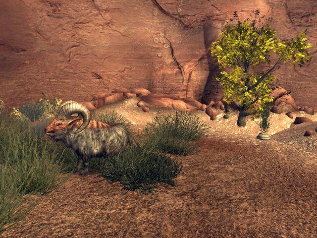 File:Bighorners ofthe Eastern Virgin.jpg