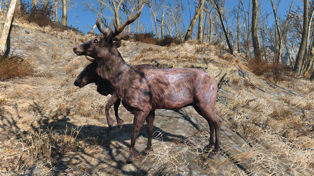 File:Fo4 Radstag.png