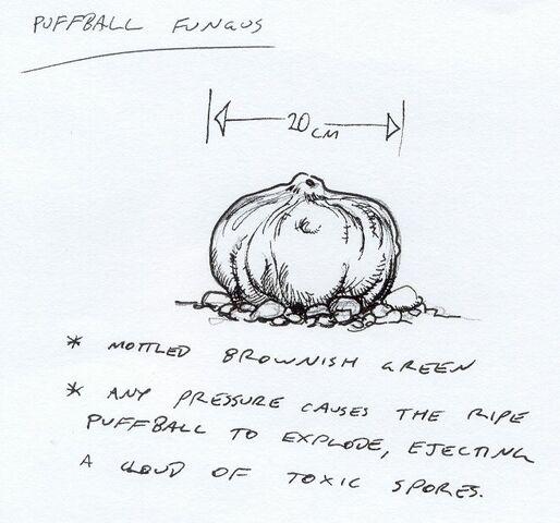 File:Puffball.jpg